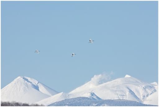 Hokkaido Cranes 13