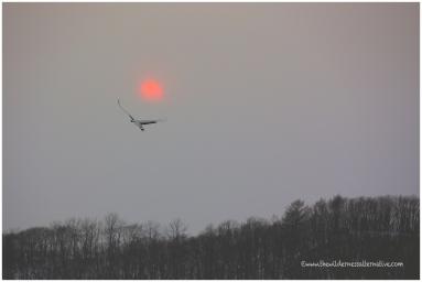 Hokkaido Cranes 19