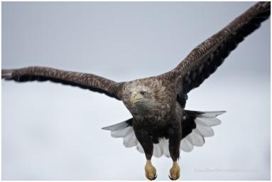 Hokkaido Eagles 10