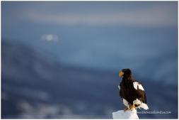 Hokkaido Eagles 12