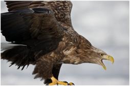 Hokkaido Eagles 16