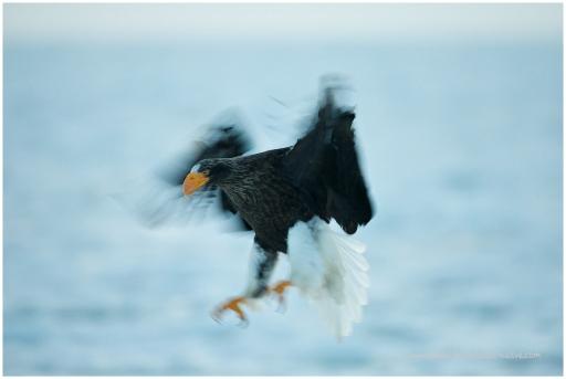 Hokkaido Eagles 17