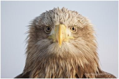 Hokkaido Eagles 2