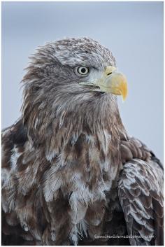 Hokkaido Eagles 20