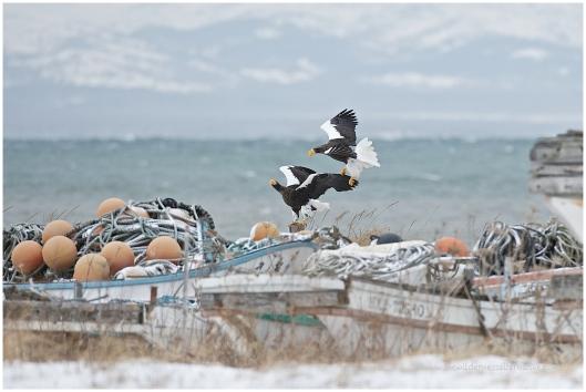 Hokkaido Eagles 21
