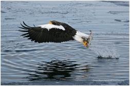 Hokkaido Eagles 22