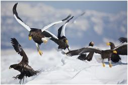 Hokkaido Eagles 4