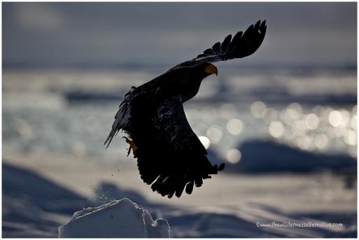 Hokkaido Eagles 6