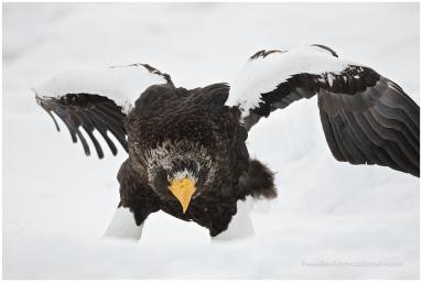 Hokkaido Eagles 9