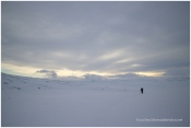 Esploring Dovrefjell