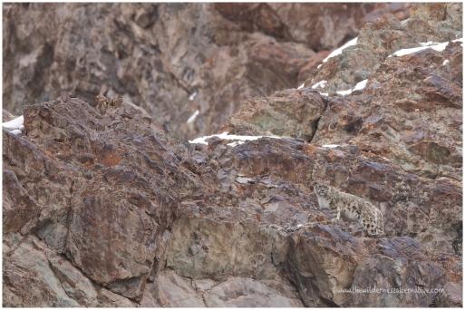 Ladakh 25