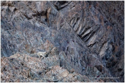 Ladakh 7
